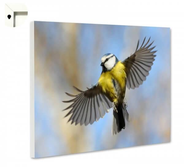 Magnettafel Pinnwand Tiere Vogel Wild Kohlmeise