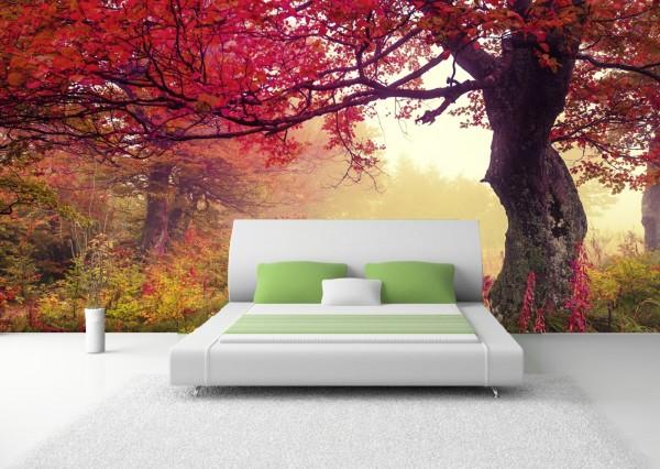 Vlies Tapete Poster XXL Fototapete Natur Baum Wiese Herbst rot
