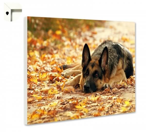 Magnettafel Pinnwand Memoboard Motiv Tiere Hund Schäferhund
