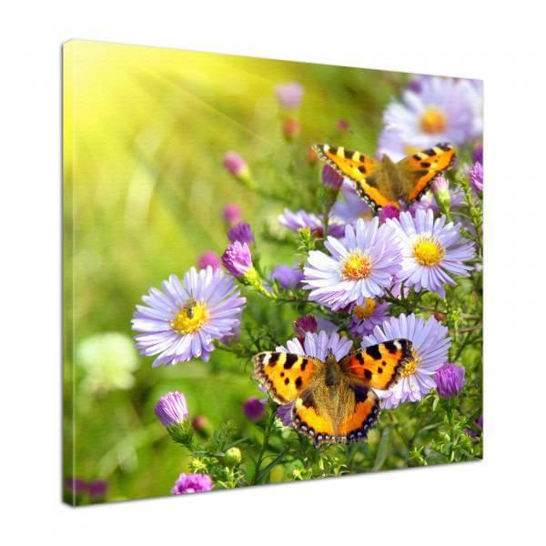Leinwand Bild edel Blumen Schmetterlinge und Astern