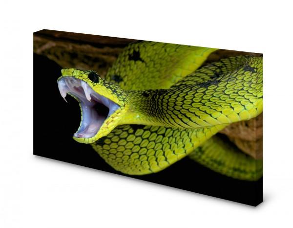 Magnettafel Pinnwand Bild Schlange grün Giftschlange gekantet