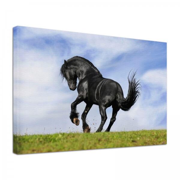 Leinwand Bild edel Tiere Pferd Black Beauty