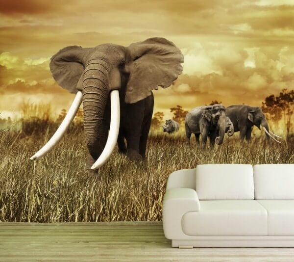 Vlies Tapete XXL Poster Fototapete Elefant Bulle Herde