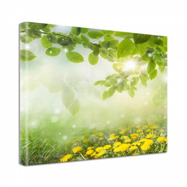 Leinwand Bild Natur & Blumen Löwenzahn Wiese in grün