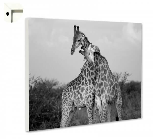 Magnettafel Pinnwand Tiere Giraffen Liebe