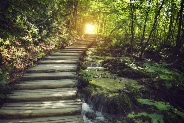 Magnettafel Pinnwand XXL Bild Wald Treppe Lichtung