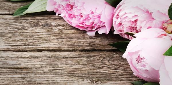 Magnettafel Pinnwand Bild XXL Panorama Holz Rosen rosa