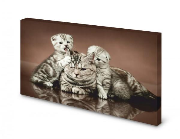 Magnettafel Pinnwand Bild Katze Faltohrkatze Jungen gekantet