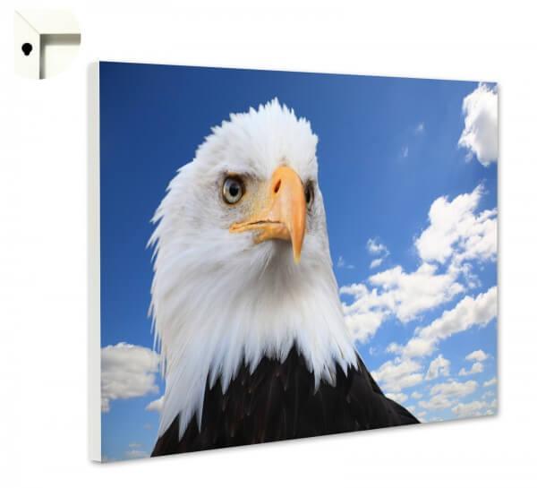 Magnettafel Pinnwand Memoboard Motiv Tiere Adler