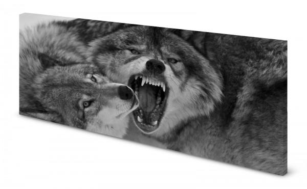 Magnettafel Pinnwand Bild Panorama gekantet Wolf Wölfe Kampf gekantet