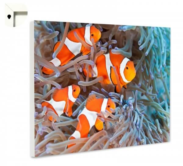 Magnettafel Pinnwand Memoboard Motiv Tiere Clown Fische