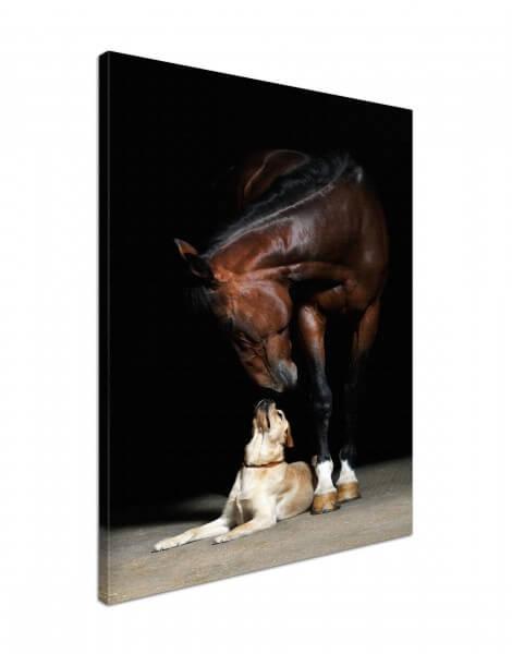 Leinwand Bild edel Tiere Pferd & Hund Freunde