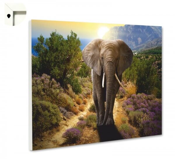 Magnettafel Pinnwand Tiere Elefant Wildnis 3
