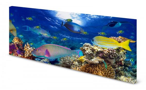 Magnettafel Pinnwand Bild Korallenriff Fische exotisch gekantet