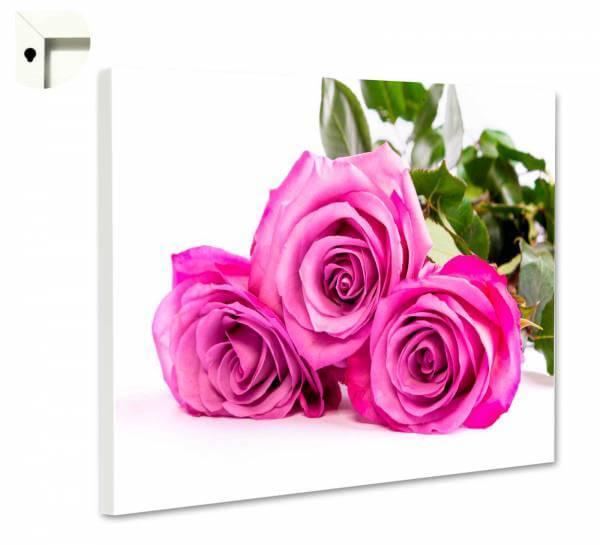 Magnettafel Pinnwand Natur Blumen Rosen Trio im pink