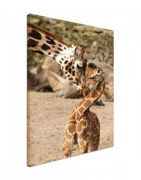 Leinwand Bild edel Tiere Giraffe Mutter & Kind