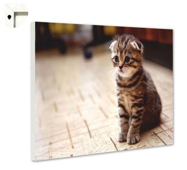 Magnettafel Pinnwand Tiere Katze Baby Kitten
