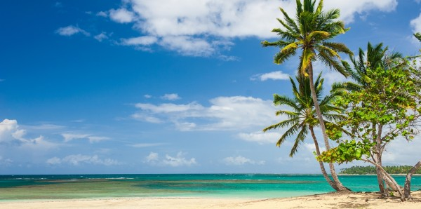 Magnettafel Pinnwand Bild XXL Panorama Karibik Palmen Meer