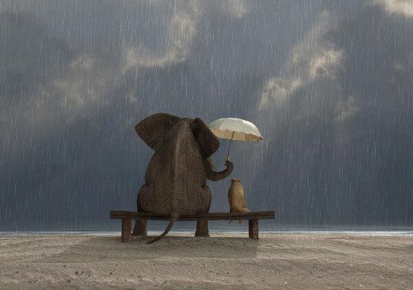 Poster Fototapete Tiere Elefant & Hund Freundschaft im Regen