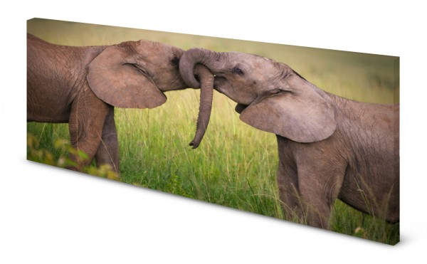 Magnettafel Pinnwand Bild Elefanten Elefantenbabys gekantet