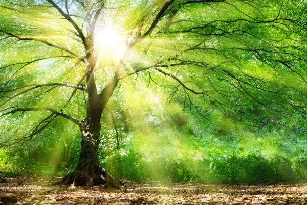 Magnettafel Pinnwand Magnetwand Natur Baum Lichtung
