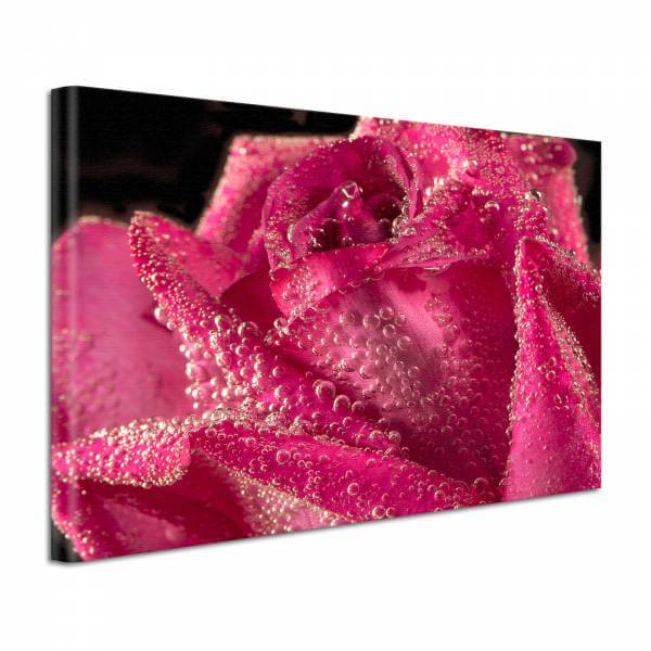 Leinwand Bild edel Blumen Rose unter Wasser