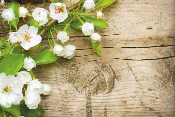 Magnettafel Pinnwand XXL Magnetbild Apfelblüte auf Holz