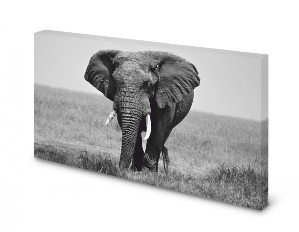 Magnettafel Pinnwand Bild Elefant schwarz weiß