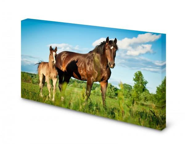 Magnettafel Pinnwand Bild Pferd Stute Fohlen XXL gekantet