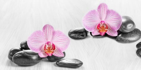 Magnettafel Pinnwand Bild XXL Panorama schwarze Steine Orchidee
