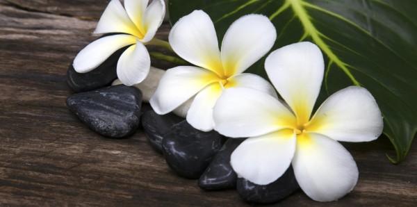 Magnettafel Pinnwand XXL Magnetbild Tropical Flower