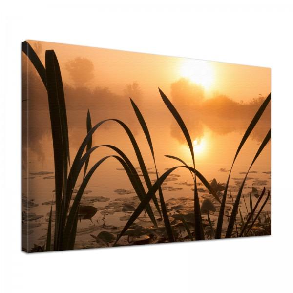 Leinwand Bild edel Natur See Nebel Schilf