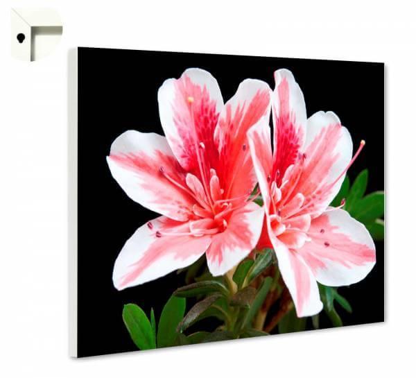 Magnettafel Pinnwand Natur Blumen Lilie in weiß und rosa