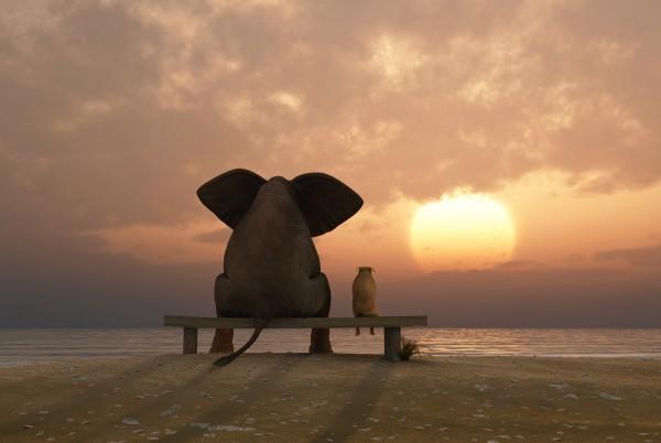 Magnettafel Pinnwand Magnetbild Elefant Hund Freundschaft
