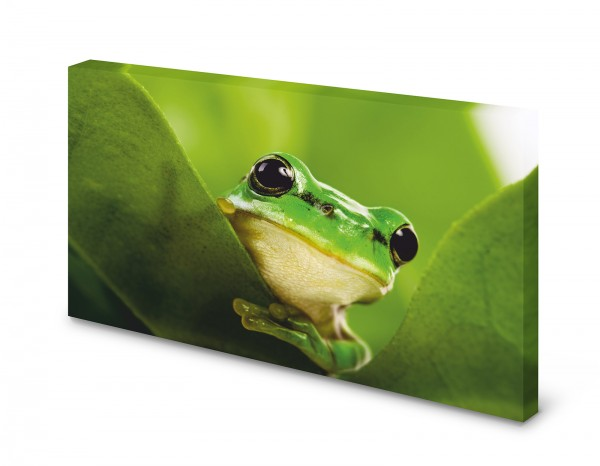 Magnettafel Pinnwand Bild Frosch grün XXL gekantet