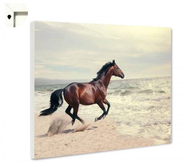 Magnettafel Pinnwand Tiere Pferd Strand Meer
