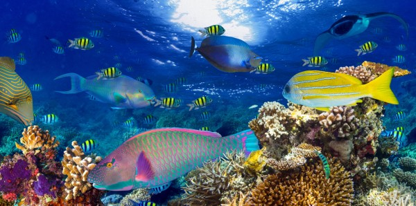 Magnettafel Pinnwand XXL Magnetbild Korallenriff Südsee