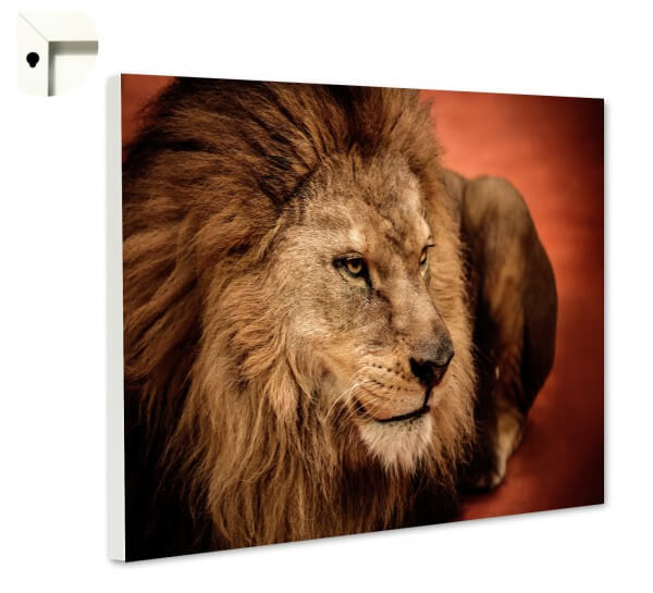 Magnettafel Pinnwand Memoboard Motiv Tiere Löwe 2