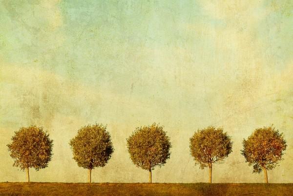 Magnettafel Pinnwand XXL Bild Landschaft Vintage Allee
