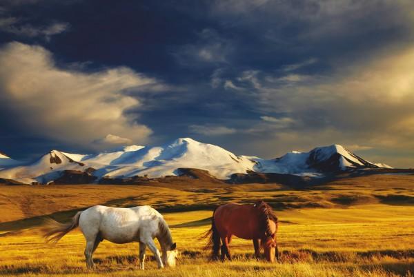 Magnettafel Pinnwand XXL Bild Pferd Pferde Steppe