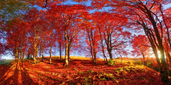 Magnettafel Pinnwand Bild Panorama Indian Summer Wald Herbst