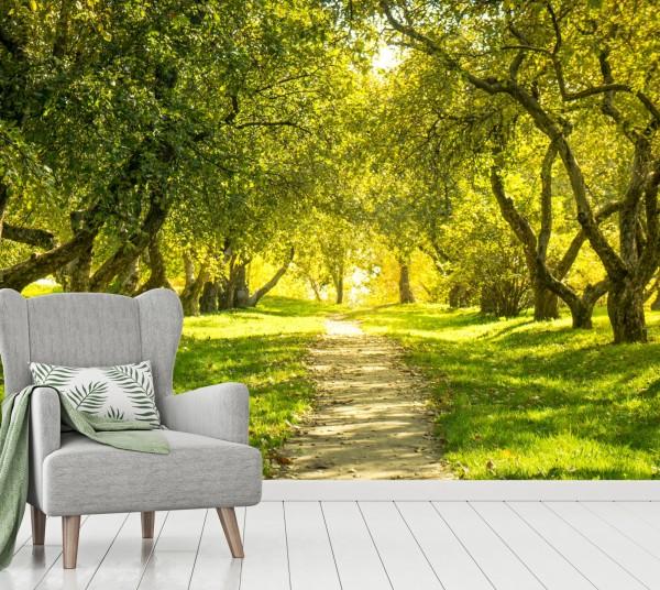 Vlies Tapete Poster XXL Fototapete Natur Baum Allee Sommer