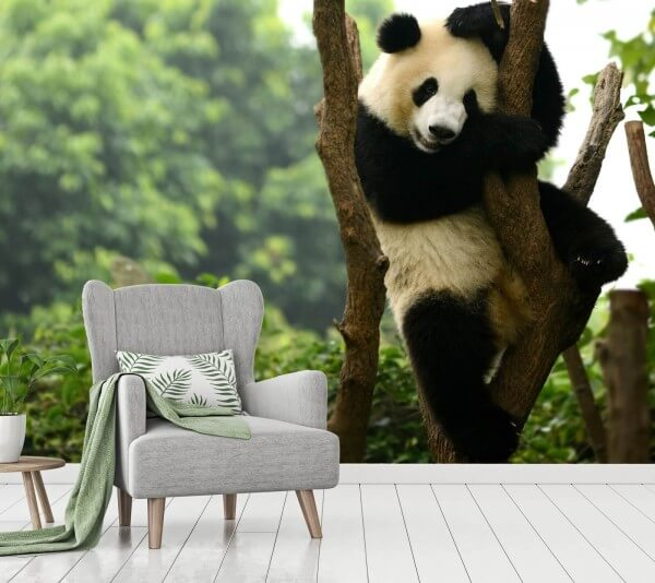 Vlies Tapete XXL Poster Fototapete Panda Bär