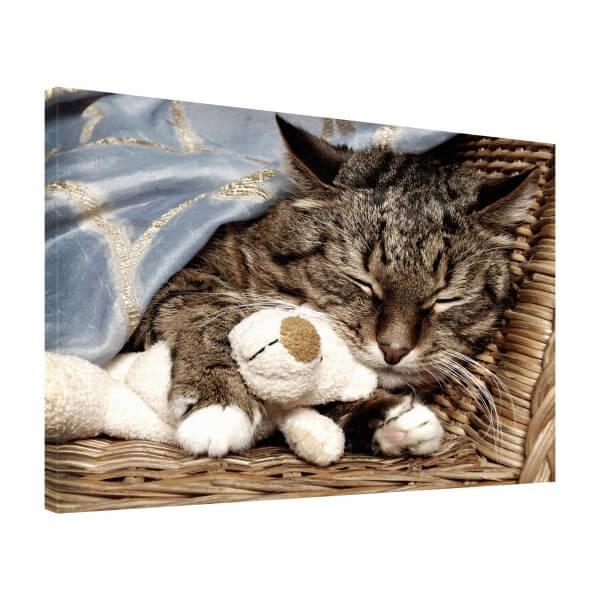 Leinwand Bild edel Tiere Katze & Teddy