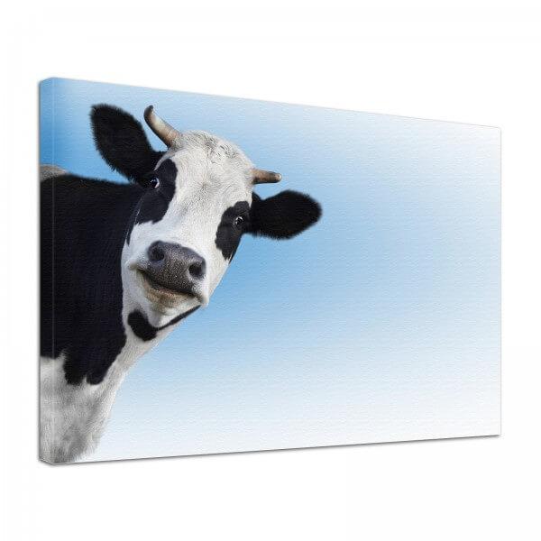 Leinwand Bild edel Tiere Kuh Holsteiner
