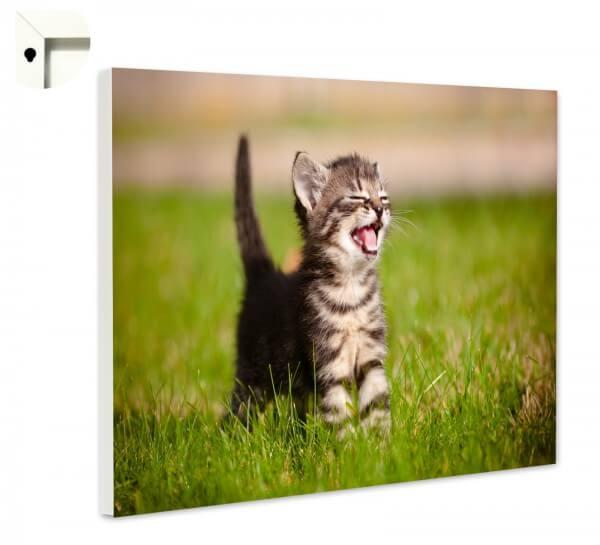 Magnettafel Pinnwand Memoboard Motiv Tiere Baby Katze miau