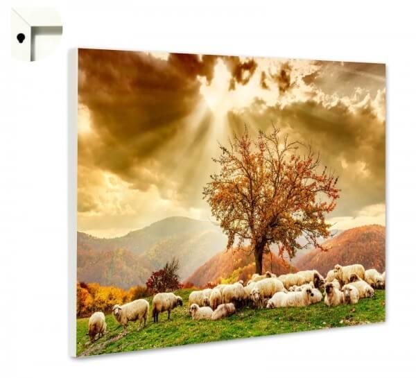 Magnettafel Pinnwand Natur Schafe Weide Sonne