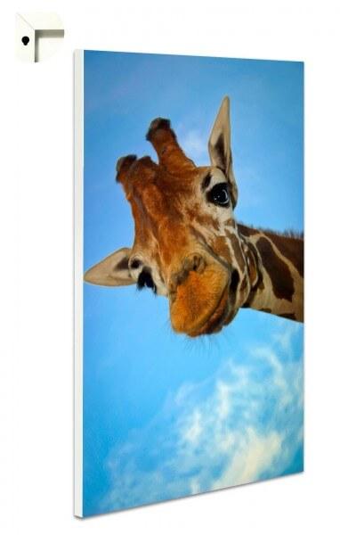 Magnettafel Pinnwand Tiere Giraffe im Sommerhimmel