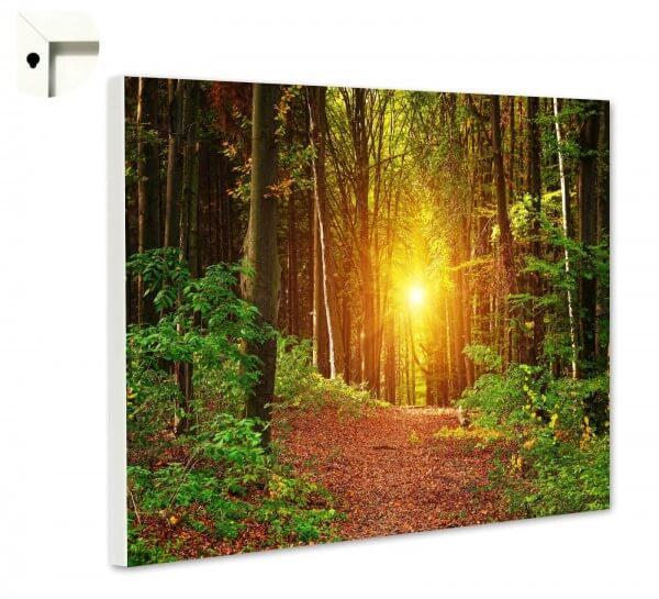 Magnettafel Pinnwand Natur Wald Lichtung Sonne