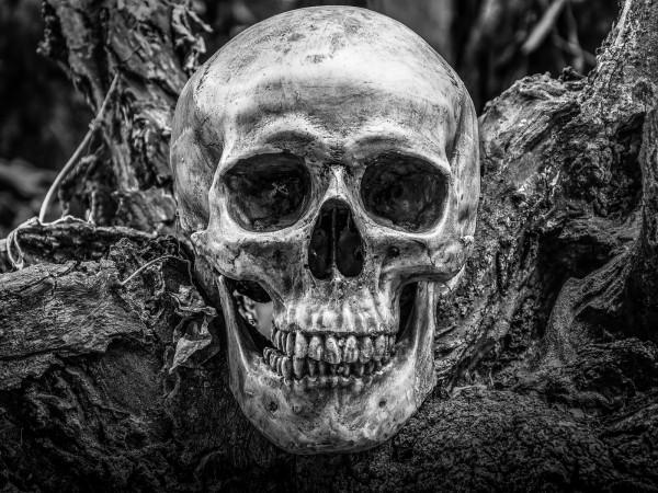 Vlies Tapete XXL Poster Fototapete Totenkopf Wurzel Erde